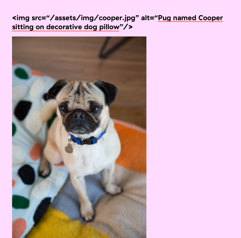 This will be a bit meta, but this is an image of an image with the alt tag marked. The image is of my pug named cooper sitting on a decorative dog pillow.